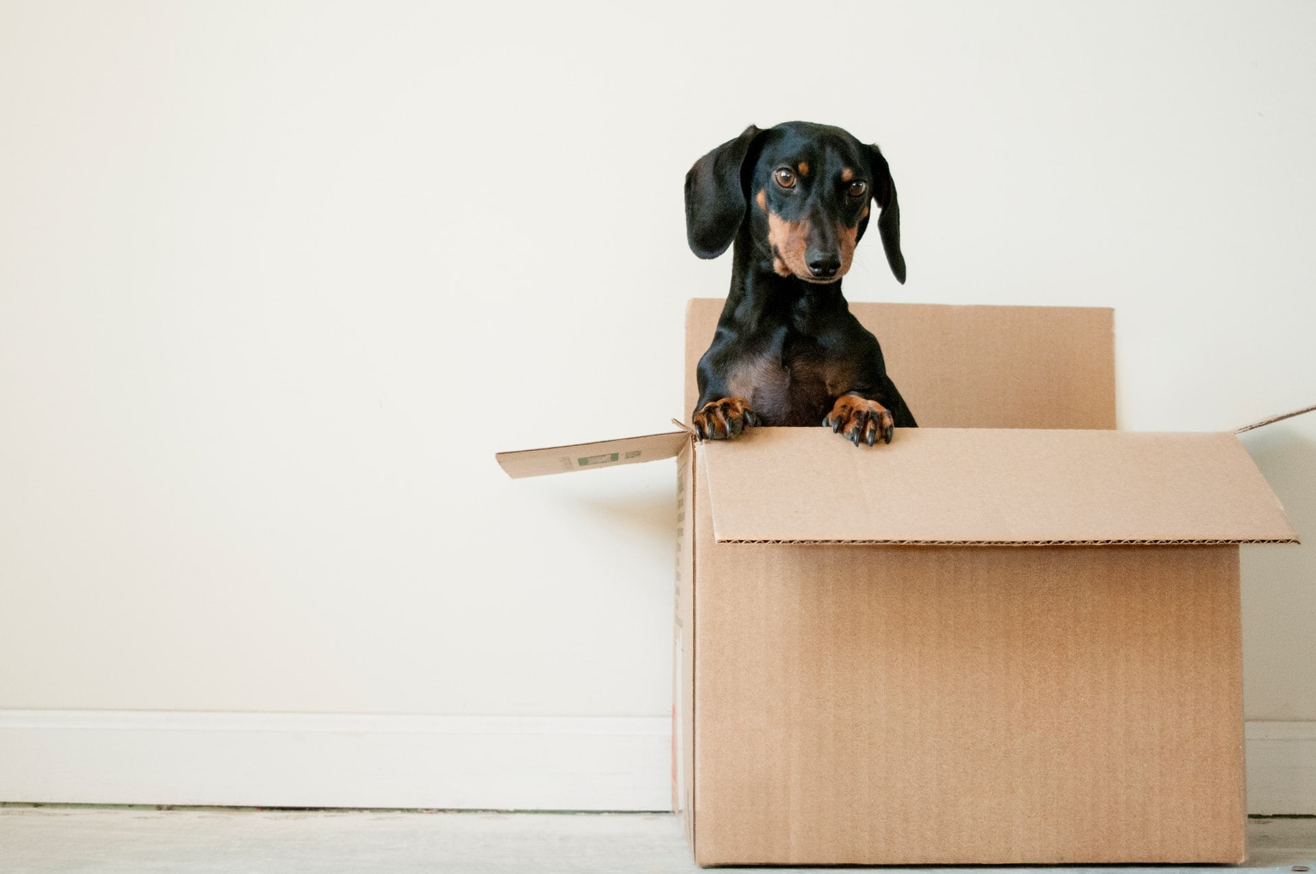 A dog sitting in a box Description automatically generated with medium confidence