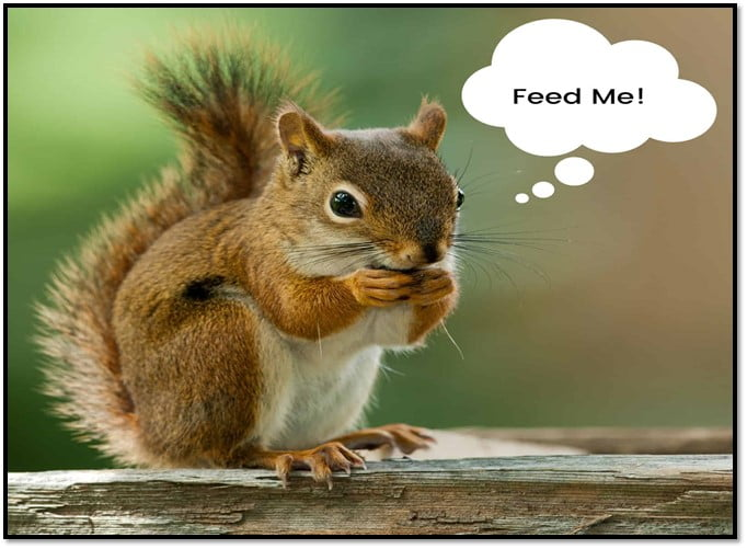 quirrels Diets Vary by Season