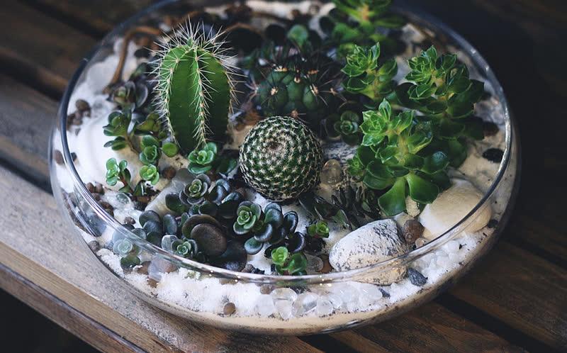 Cactus Terrarium in a Bowl