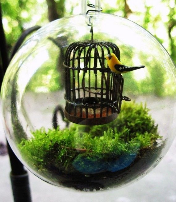 Caged Terrarium