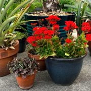 Ceramic Vs Plastic Pots Which is the Best Pot Material for Indoor Plants