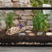 DIY Terrarium Ideas
