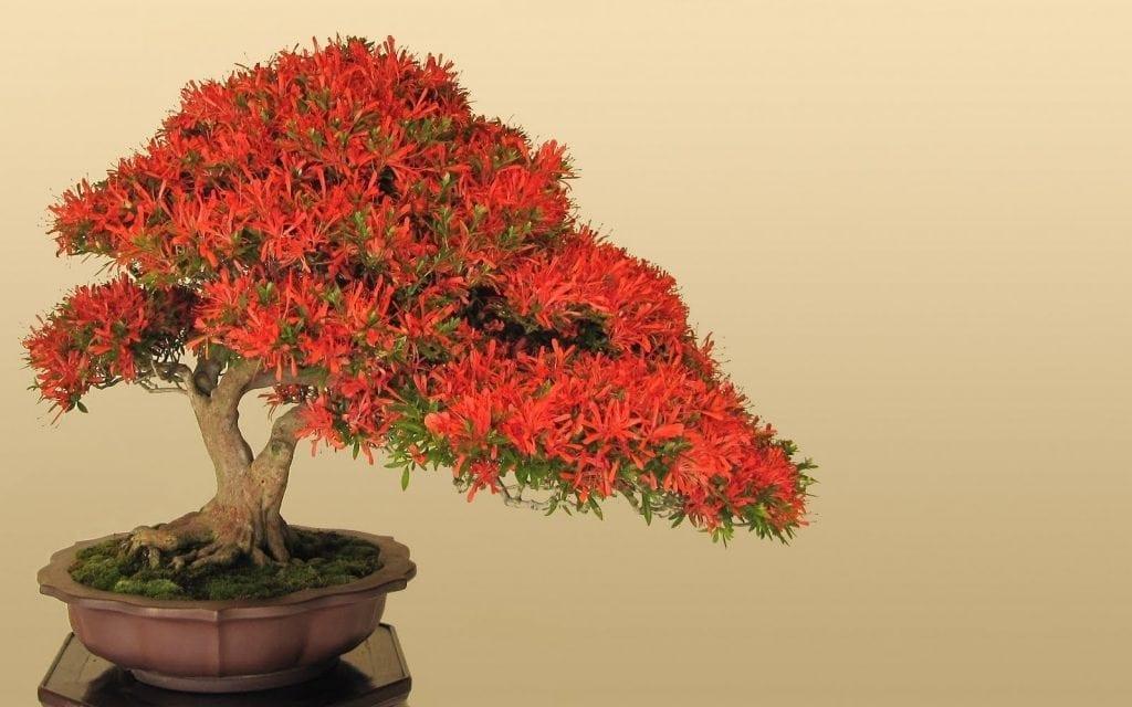Flowering Trees bonsai