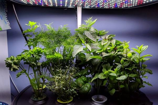 How Much Does It Cost to Run an AeroGarden