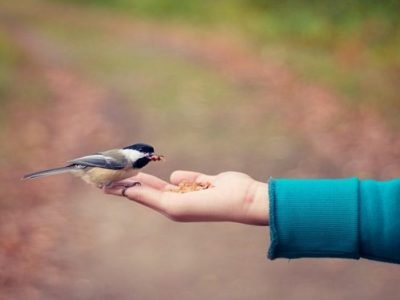 How To Catch a Bird Without Hurting It