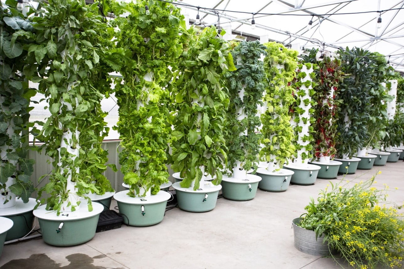 How To Make Hydroponic Systems at Home
