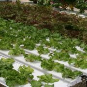 How To Make Your Own DIY Hydroponic Tower Garden