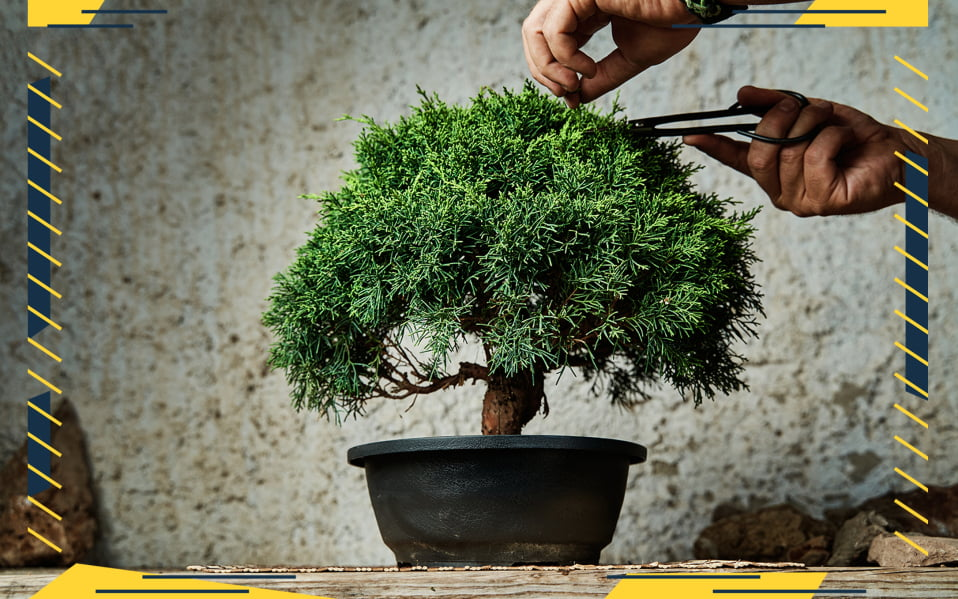 Make an Easy Bonsai Tree