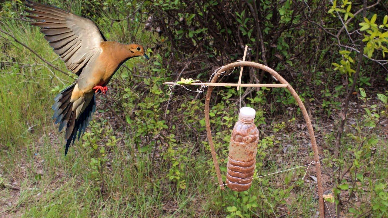 Ojibwa Bird Trap