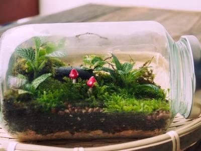 Plants for a Closed Terrarium
