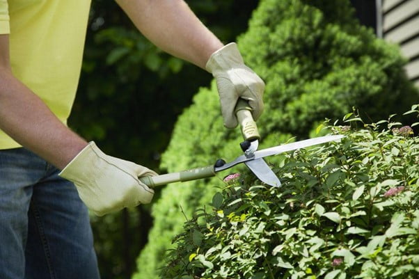 Prune the Plants and Trees