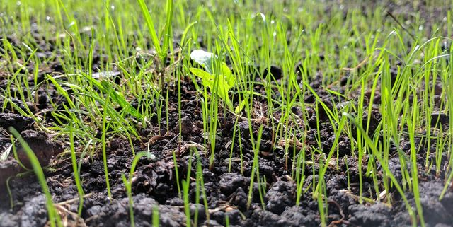 Steps by Step Guide to Sow Lawn Seeds