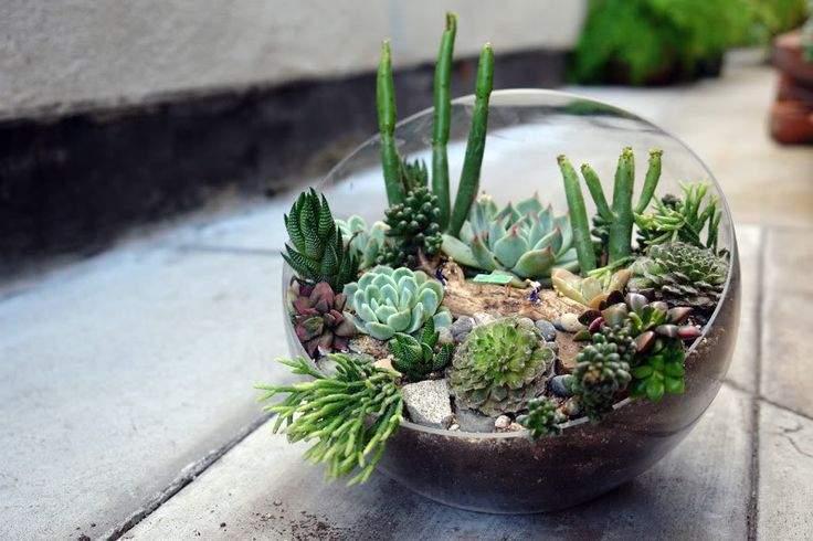 Succulent in Terrariums