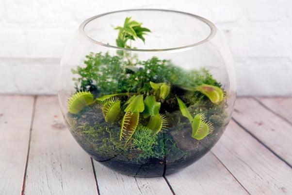 Terrarium Plants Rare Selective Plant Ideas to Grow in Your Terrarium