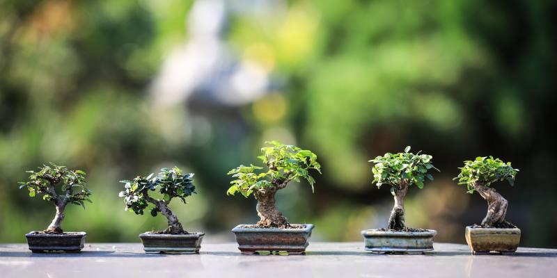 Trees to Make a Bonsai Tree Indoors