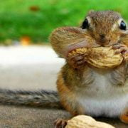 Want To Feed Squirrels Here are the Food You Should Carry