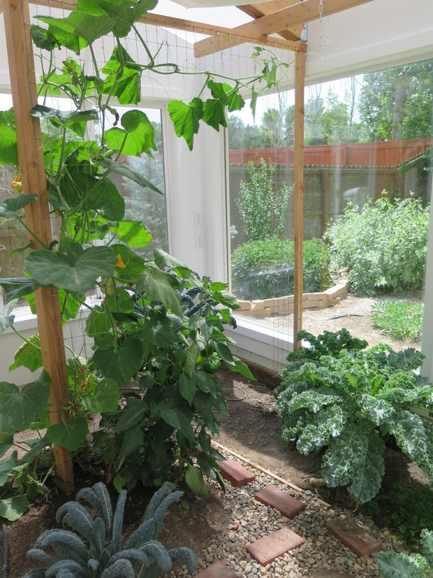 Want to Grow Exotic Plants this Summer Find Out How with a Green House