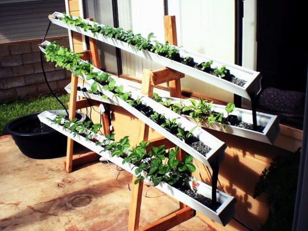 What Is the Best Hydroponic System to Start with