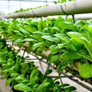 What is Vertical Farming - Future of Agriculture