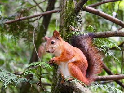 Why Don't We Eat Squirrels Weird Facts About a Quirky Animal
