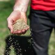 Will Grass Seed Grow if you just Throw it in Soil