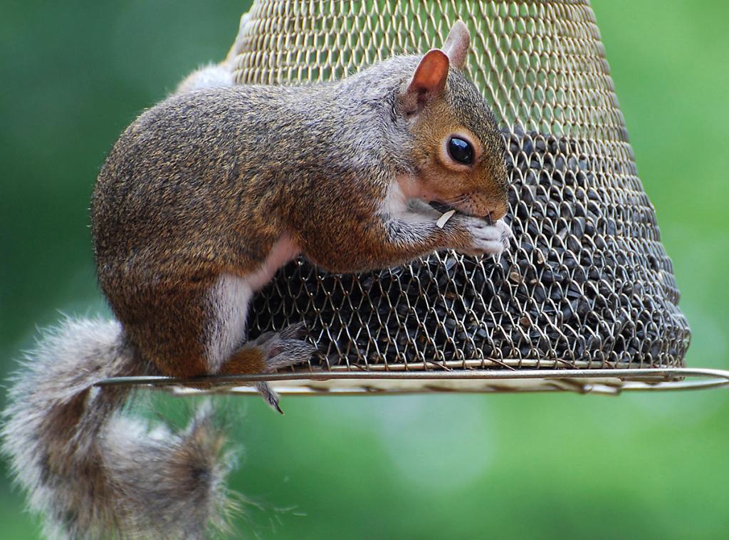 Baby Squirrel Week 3