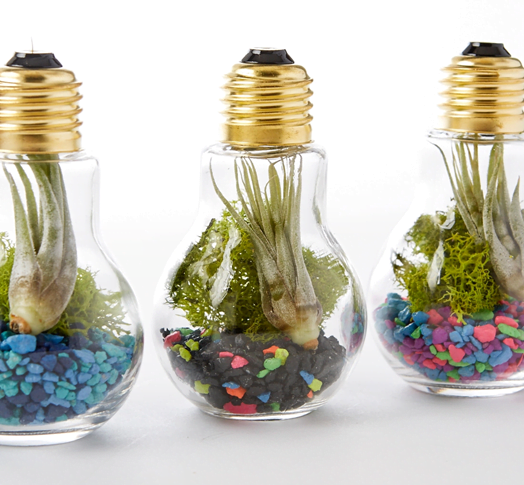 DIY Terrarium Ideas for Your Home