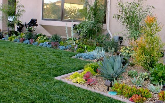 Desert Plants That Are Excellent for Landscaping