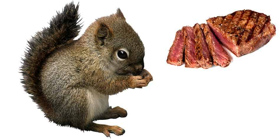 Eating Squirrel Meat