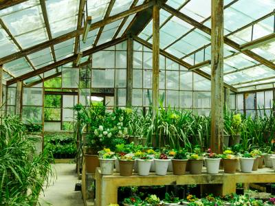 Growing Exotic Plants This Summer with a Greenhouse