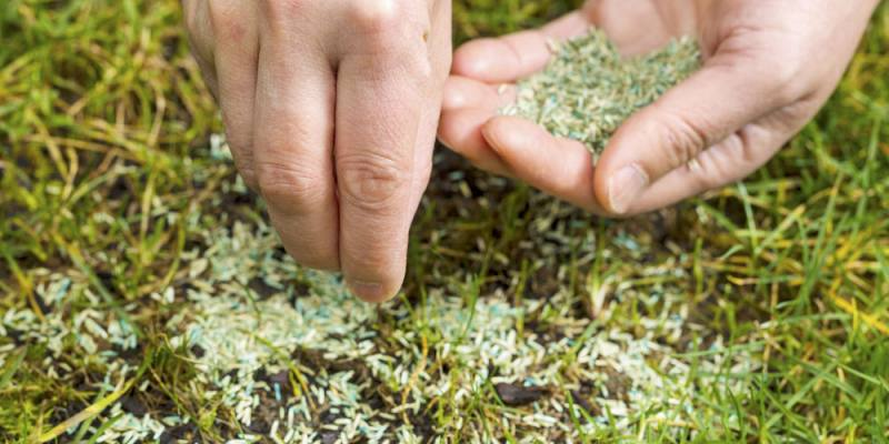 How Long Does it Take to Grow Grass from Seed