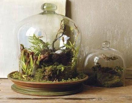Mini Bell Jar Terrarium