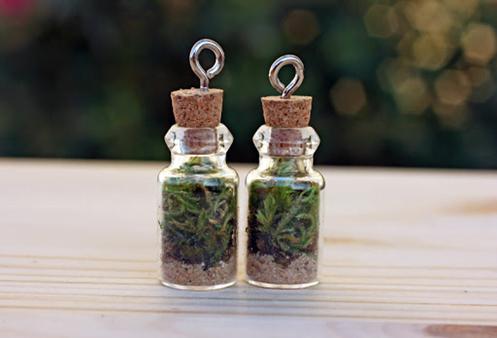 Miniature Bottle Terrarium