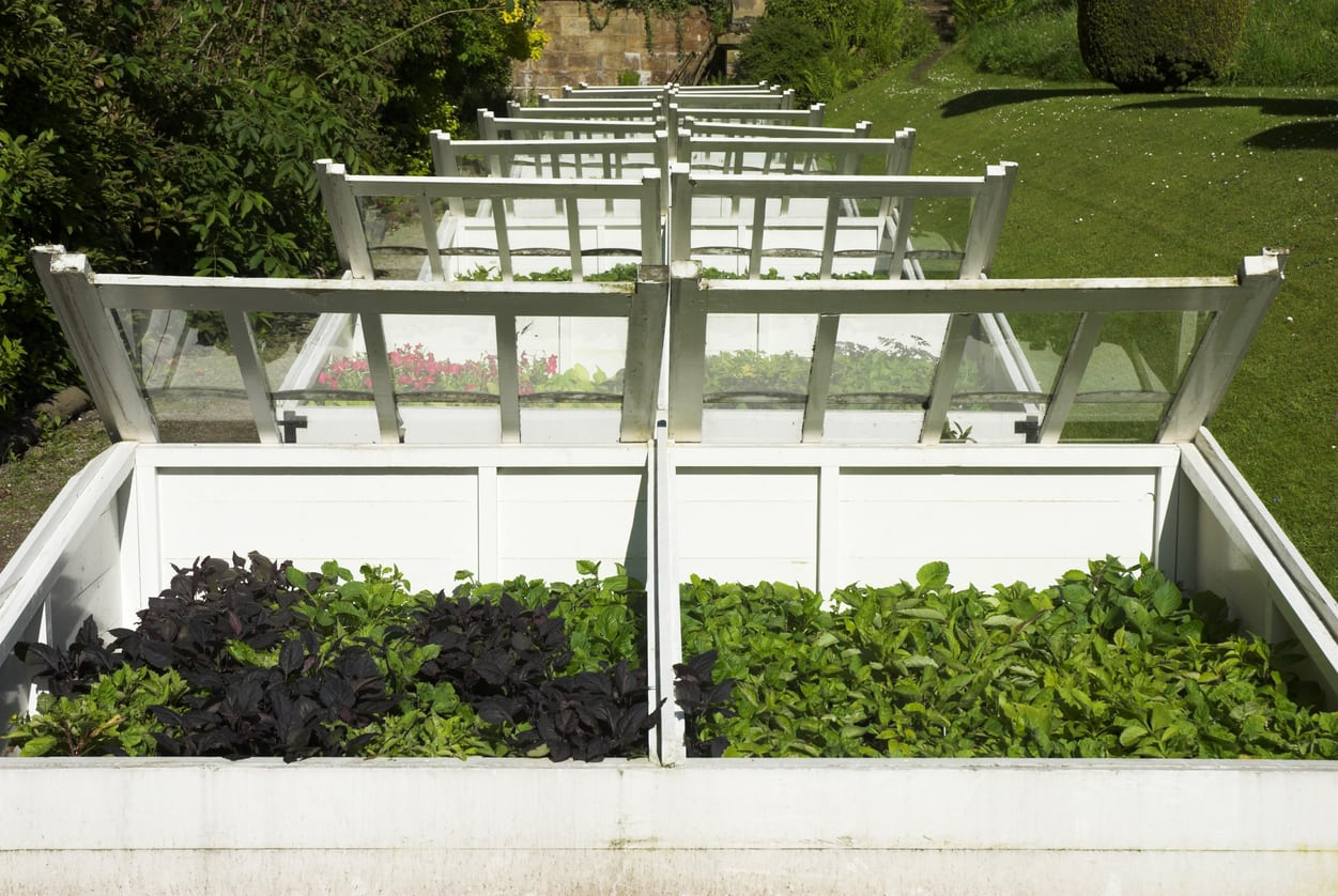 Plants that can be grown in a Cold Frame Greenhouse