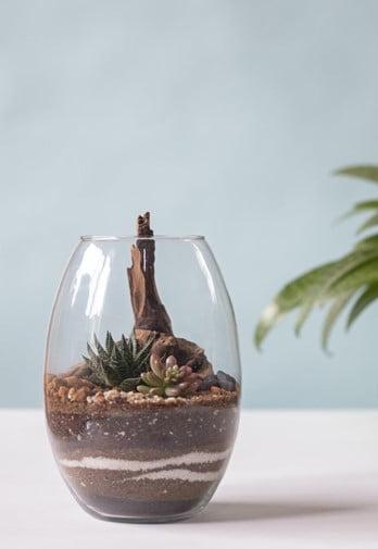 Shot Glass Terrarium