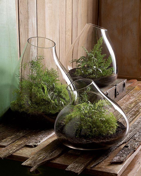 Small Glass Bubble Terrarium
