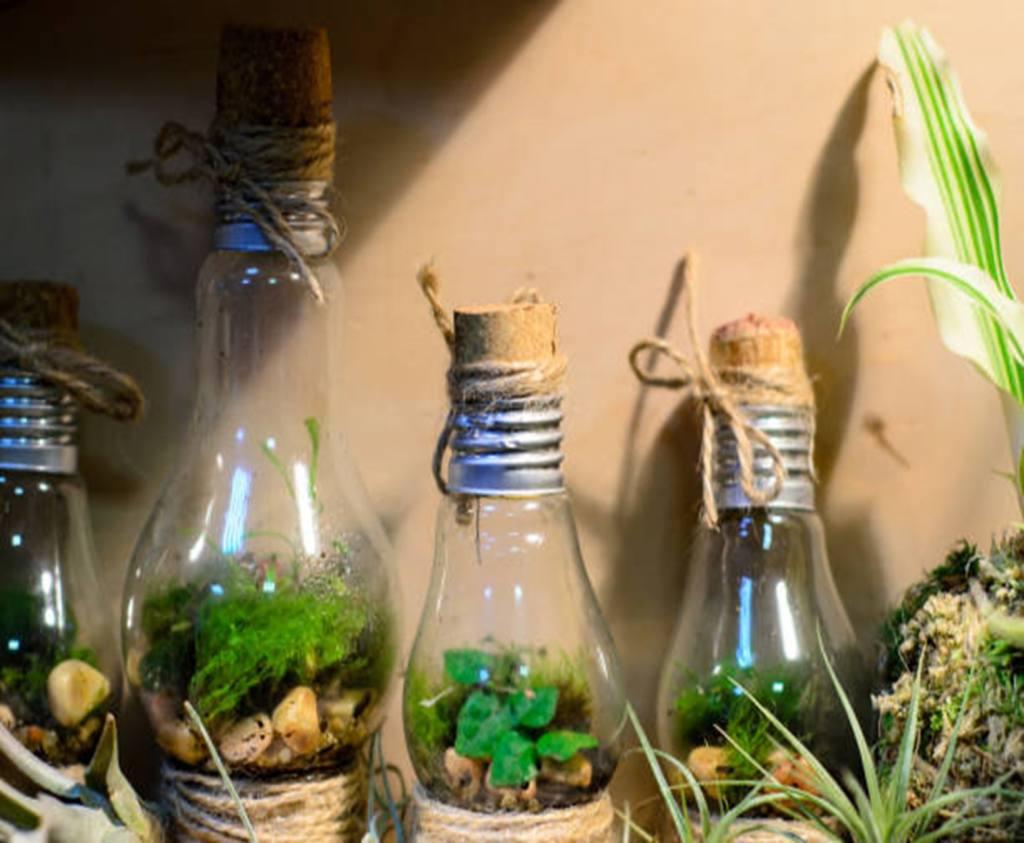 Small Light Bulbs Terrarium