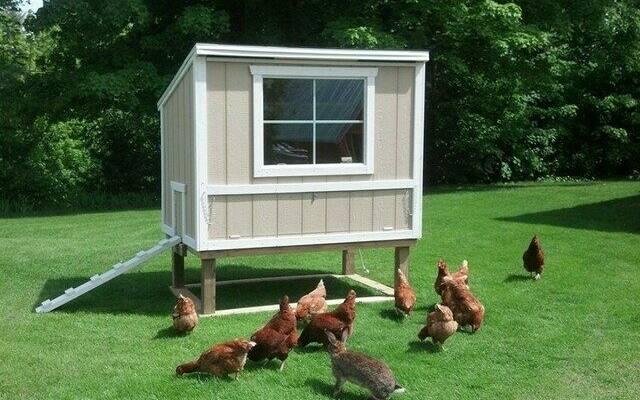 The Best Automatic Chicken Coop Door Opener 7 Reviews