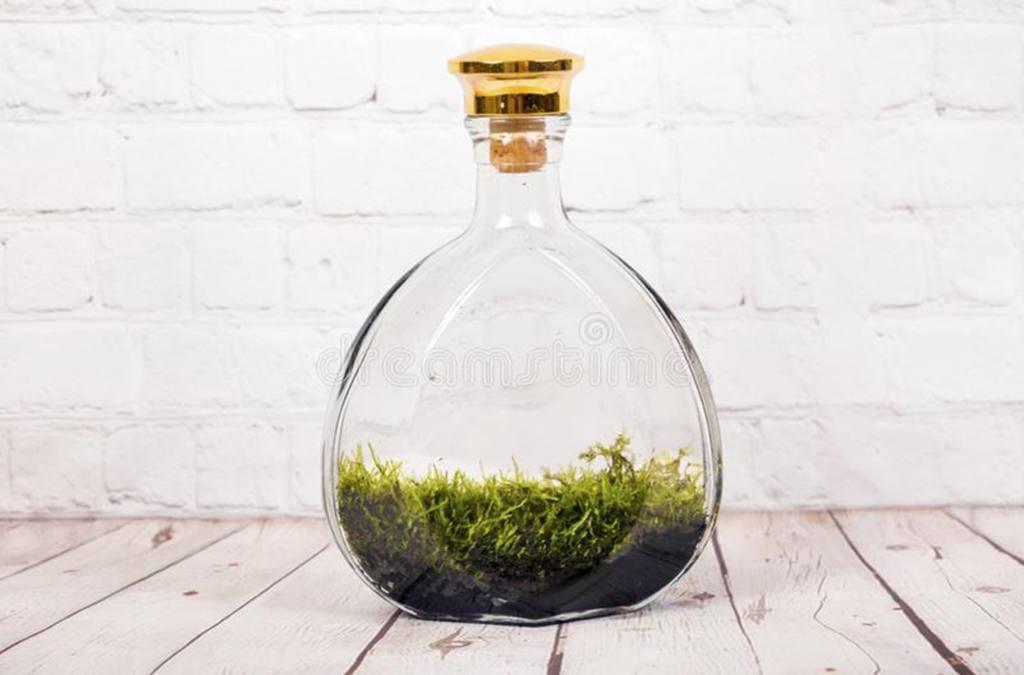 Tiny Corked Apothecary Bottle Terrarium