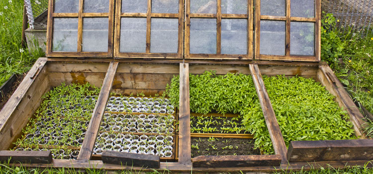 Vegetable Seed Plants to Grow in a Cold Frame Greenhouse