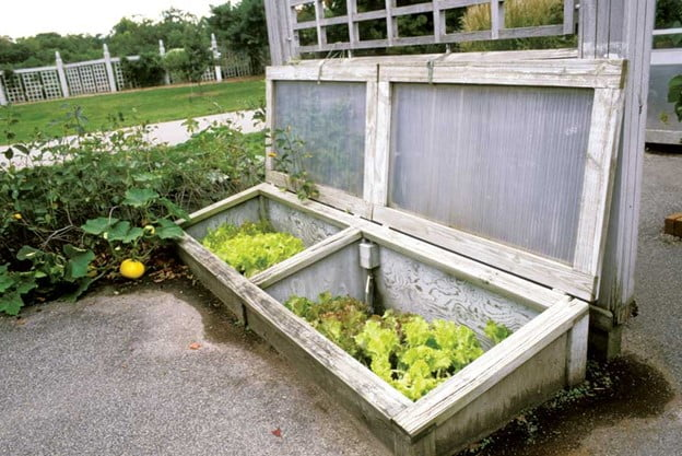 Ways To Grow Fresh Food in Winters