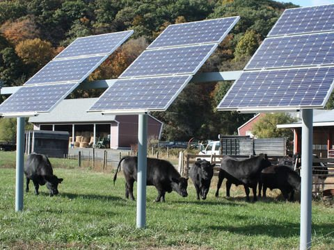 What Is a Solar Garden The Ultimate DIY Energy Solution