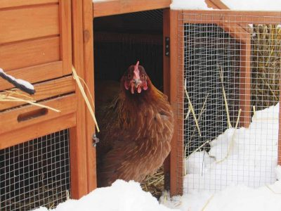 A chicken coop in winter