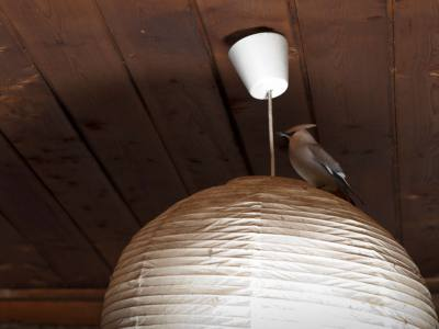 Catch a Bird in The House