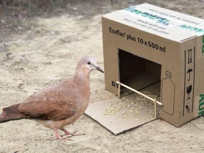 Catch a Bird with a Box