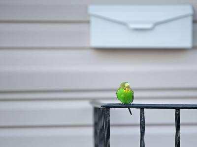 Catch an Escaped Bird