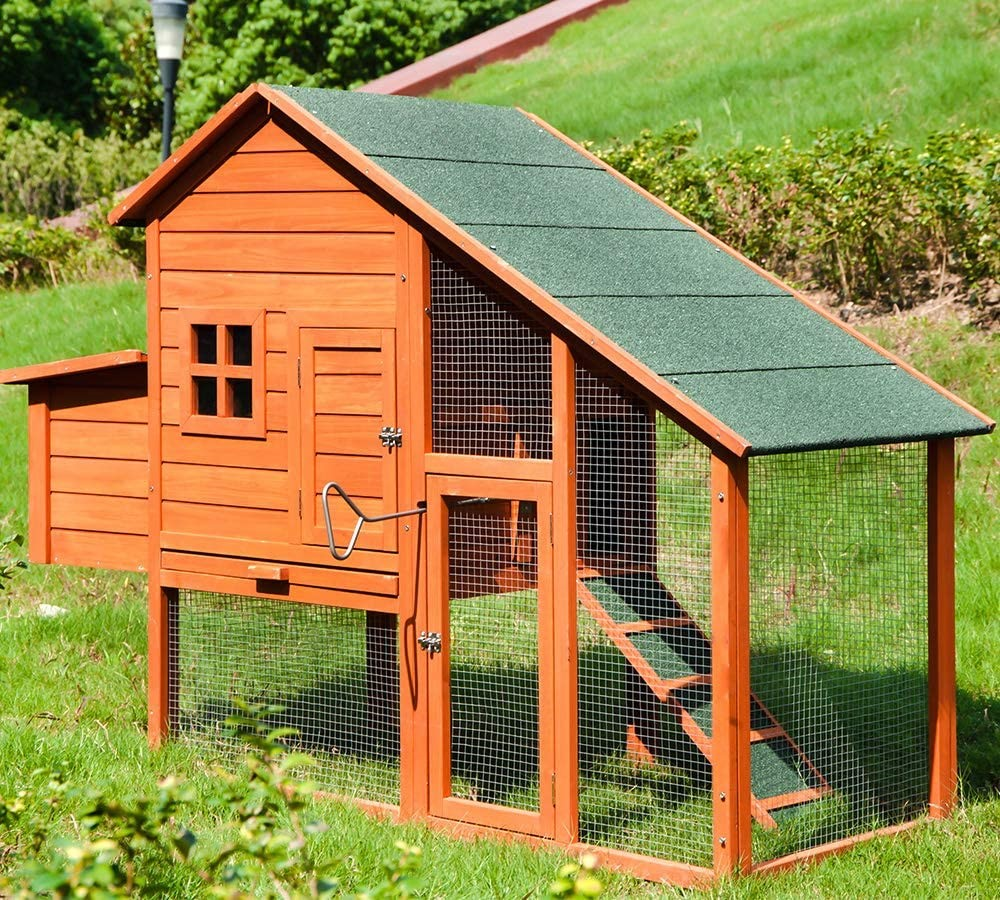 Chicken Coop Door