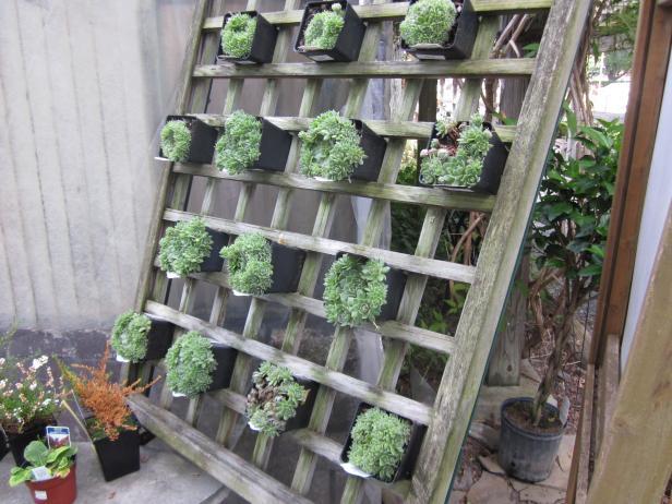 DIY Vertical and Horizontal Garden