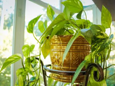 Houseplant Protection Guide