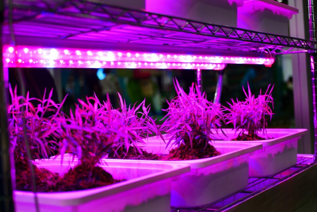 How Far Should Seedlings Be from a Grow Light
